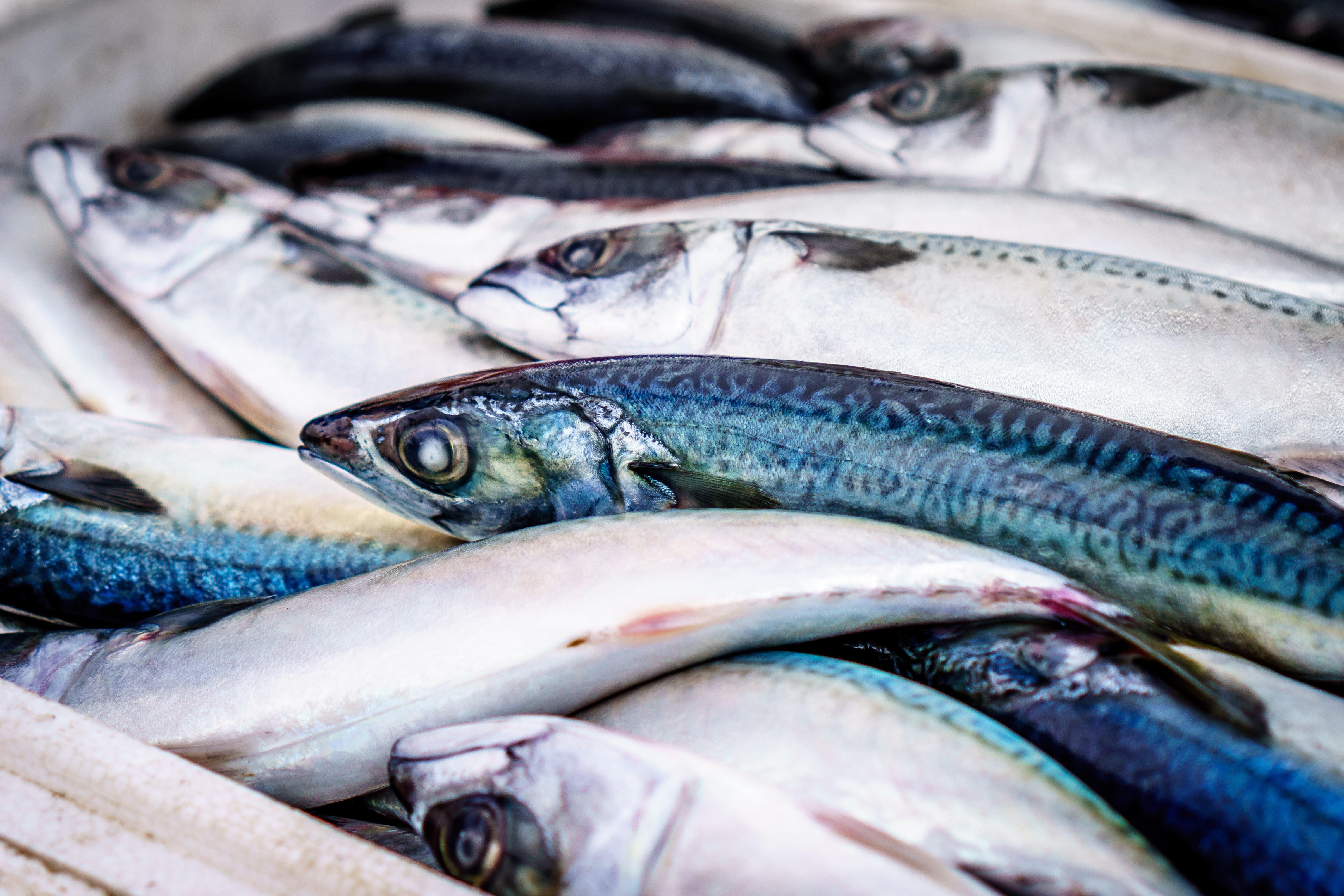 Pesce azzurro e pesce bianco: che differenza c'è?