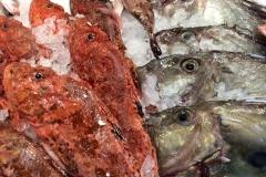 pesci12