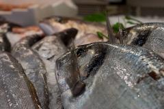 pesci6