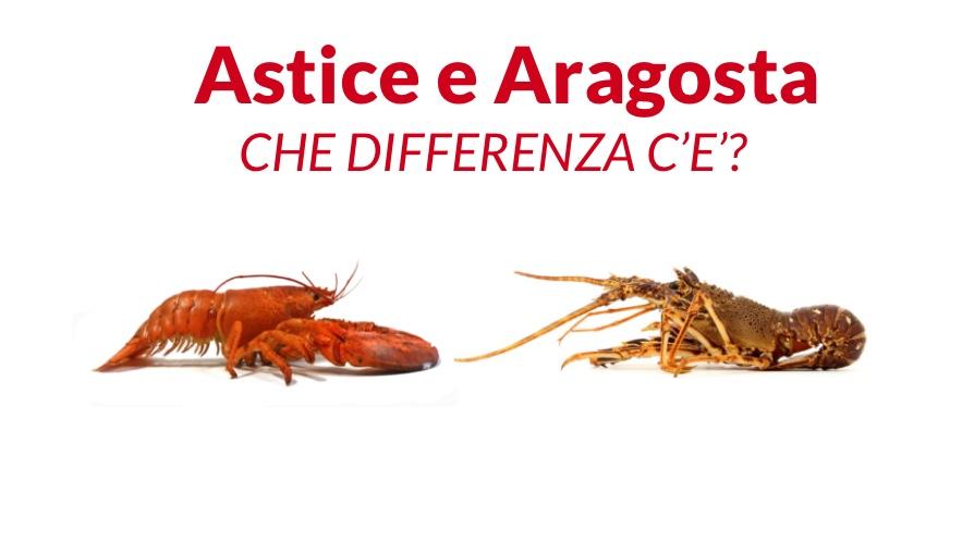 ASTICE E ARAGOSTA: CHE DIFFERENZA C'E'?