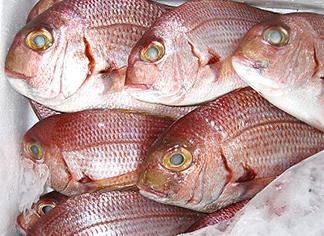 Dentice, un pesce prelibato | marblu