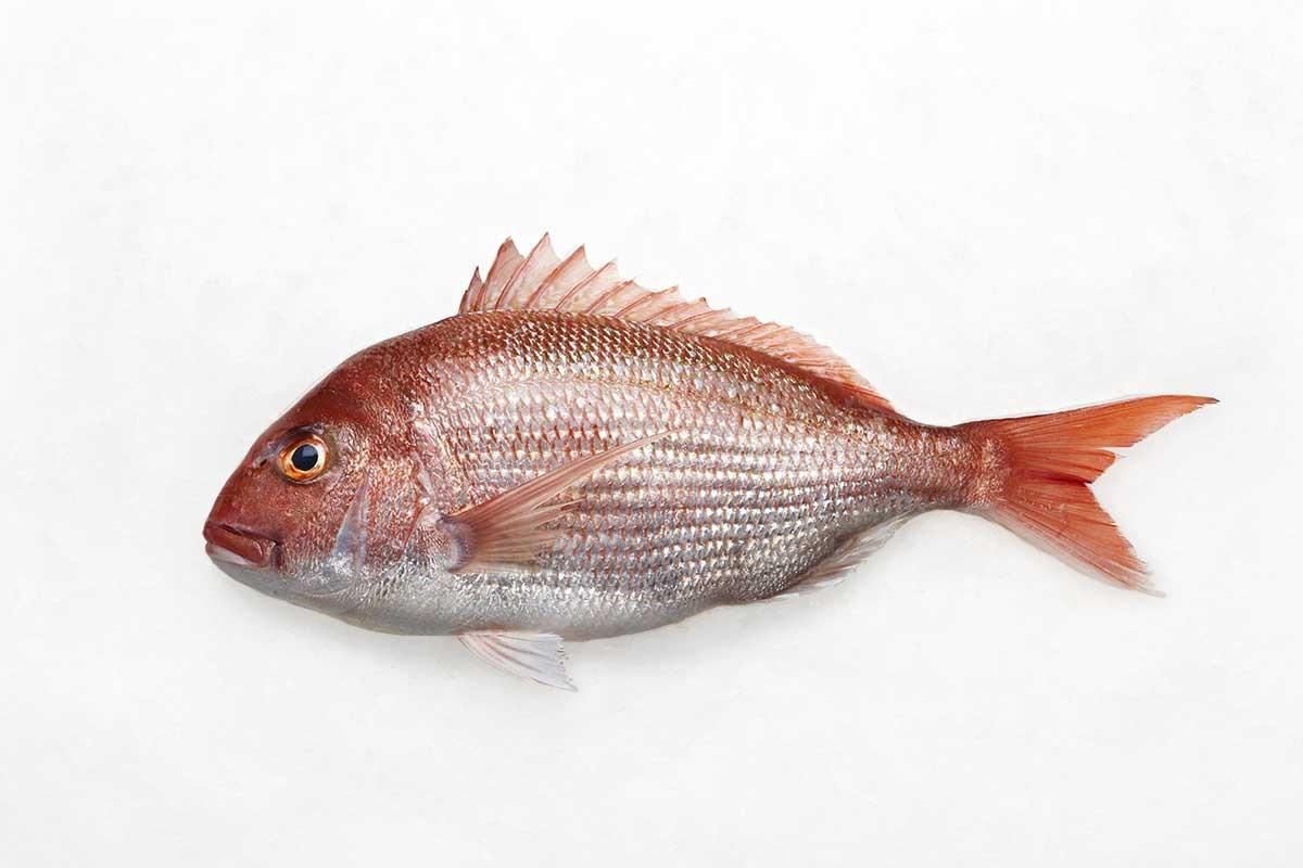 Occhione o Pagello: un pesce semplice e gustoso | Ricette Marblu
