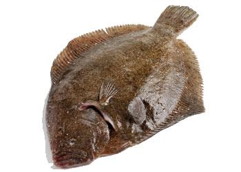Pesce rombo: impariamo a conoscerlo