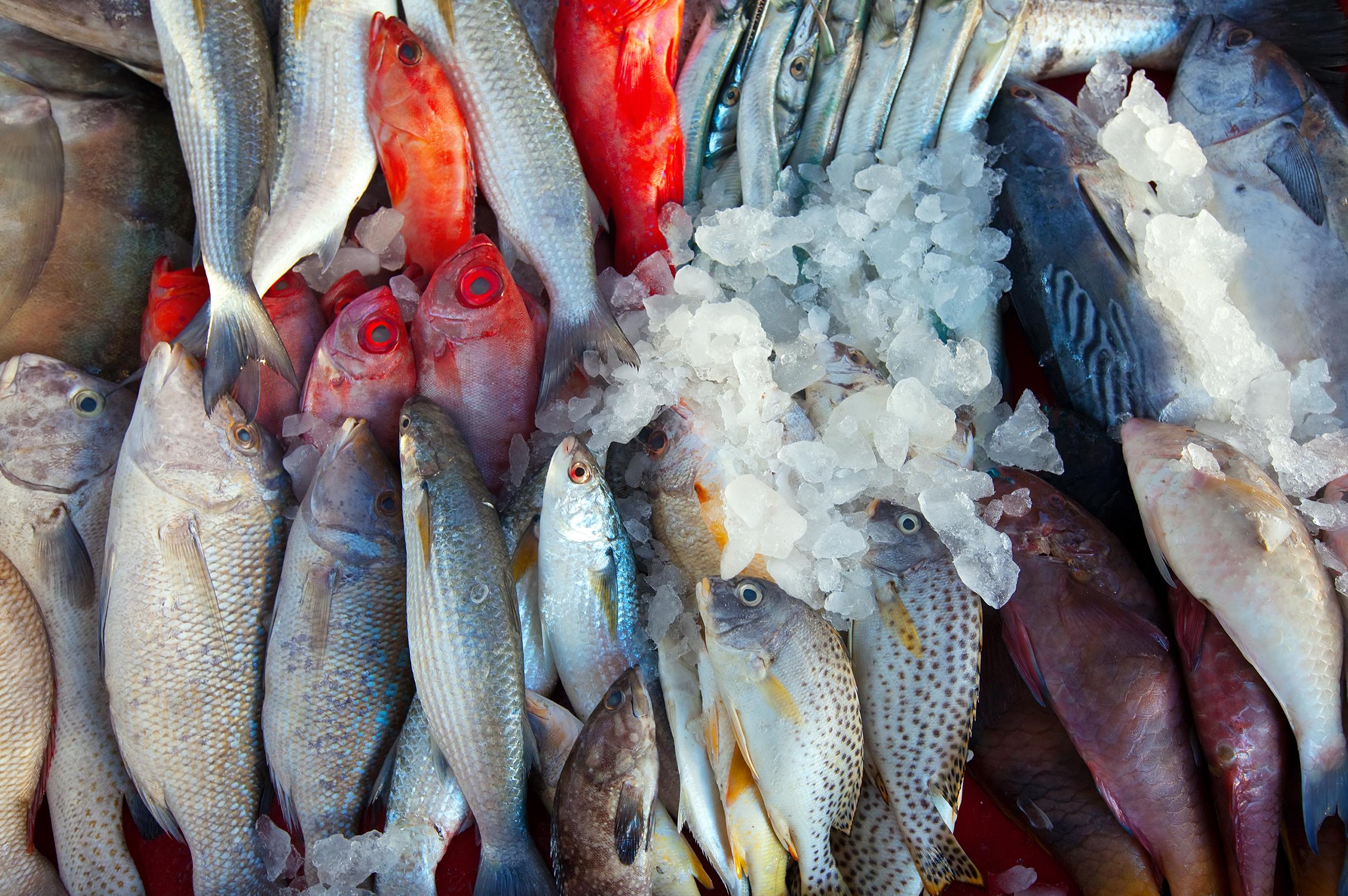 Pesce fresco di stagione: perché sceglierlo